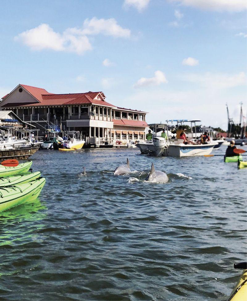 Paddle Shem Creek alongside dolphins with Coastal Expedition's kayak harbor tour.
