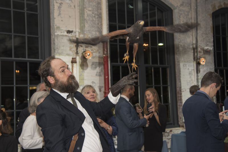 The Harris hawk launches from Lance Doll's arm.