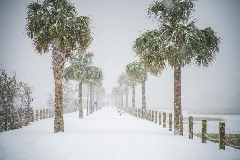 <strong>Pitt Street Bridge:</strong> The surreal beauty of palms covered in snow; <em>photograph by Nicholas Skylar Holzworth</em>