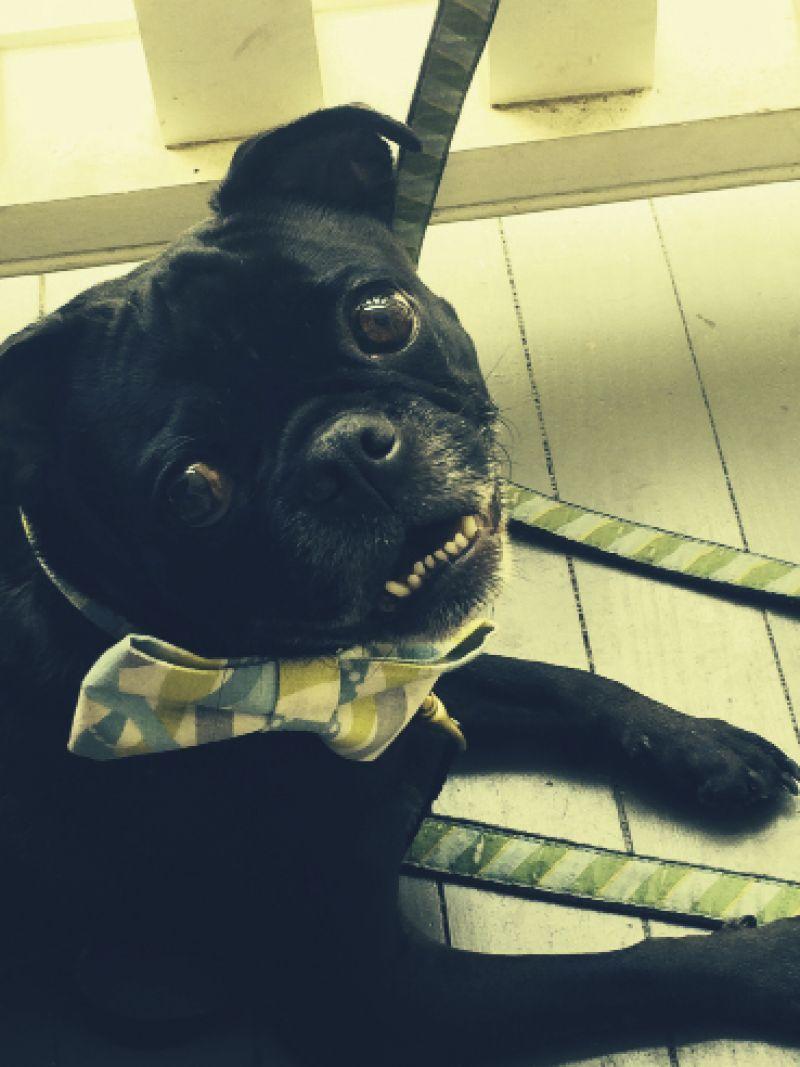 Senior Editor, Melissa Bigner's dog Oscar