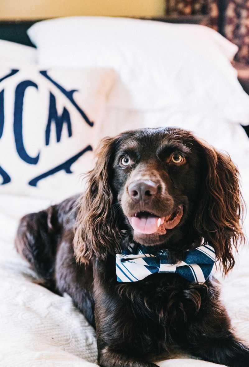 """posh pup The Viscount Gabriel Cipriani of Windermere (aka """"Cips"""") awaits his debut: """"Know how your guests feel about pets; if any are wary, perhaps introduce your dog on a leash or send him out for a playdate,"""" advises Mitchell"""