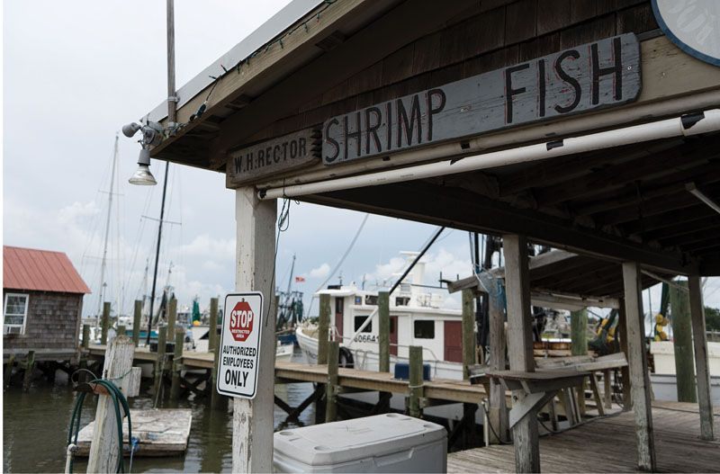 The shrimp brought in by Rector and other shrimpers are sold to grocery stores and restaurants, as well as on the docks, including at the Rector family's Geechie Seafood.