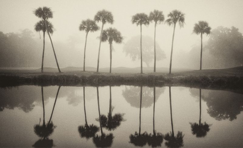 A row of palms mirrored in a pond on Kiawah Island.