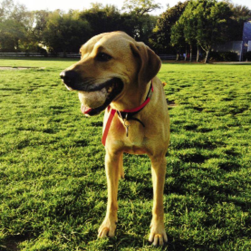 Advertising Traffic Manager & Social Media Coordinator, Rachel Cope's dog Kaia