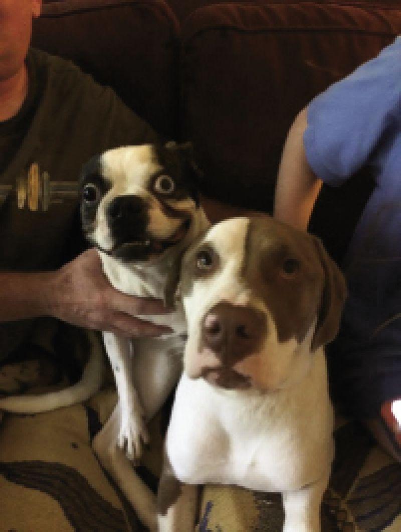 Art Director, Melinda Smith-Monk's dogs Mr. Fong & Hank