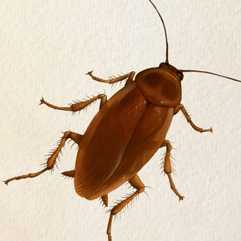 charleston magazine palmetto bug charleston sc