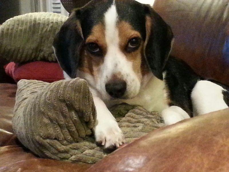 Editor-In-Chief, Darcy Shankland dog Baru