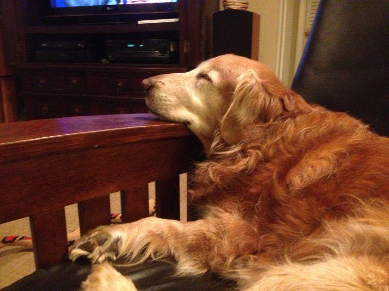 Editor-In-Chief, Darcy Shankland dog Riley