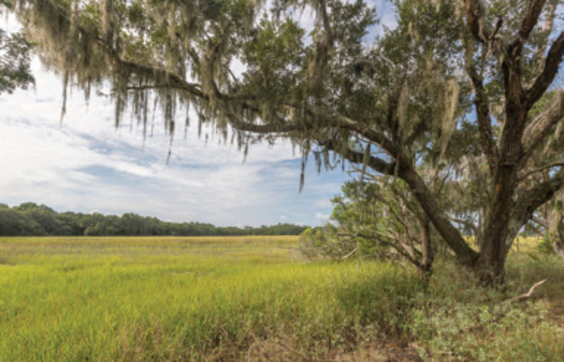 "Good Country People: ""My favorite part of the Lowcountry is Wadmalaw—it's as country as can be and feels like home."""