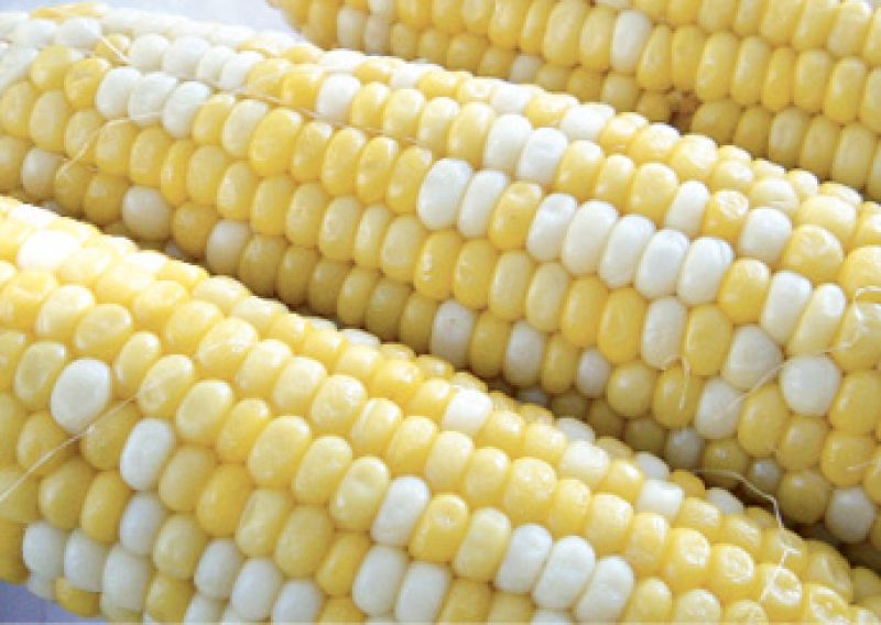 """Corn Pick: """"'Peaches and Cream'; it has the sweetest flavor on the market."""""""