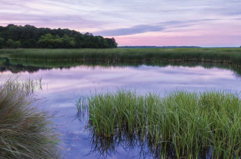 ACE Basin National  Wildlife Refuge