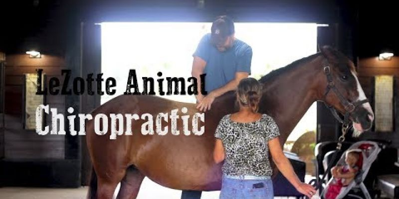 Embedded thumbnail for VIDEO: Lezotte Animal Chiropractic