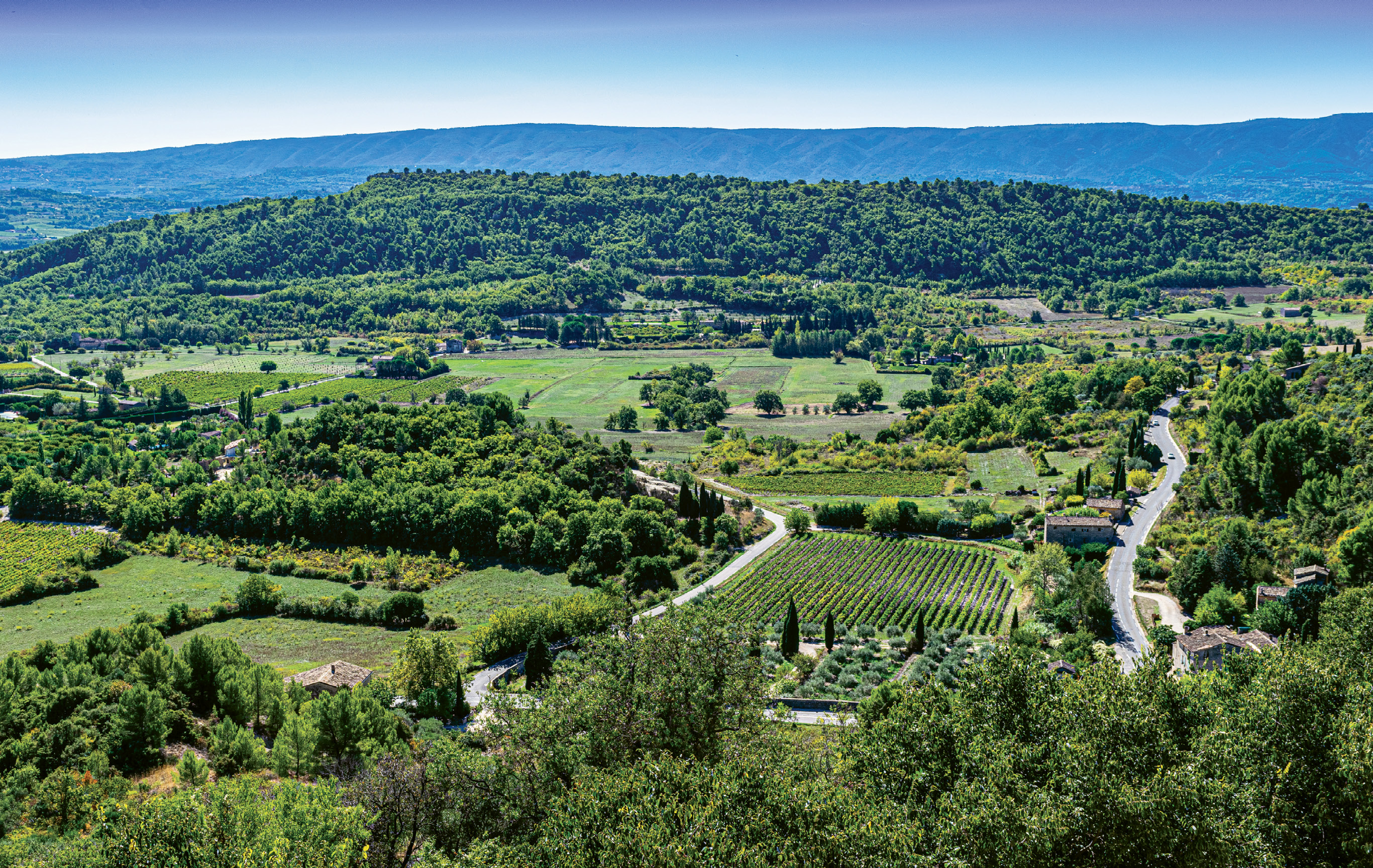 Vineyards, olive groves, and cypress trees were as far as the eye could see in the Luberon.