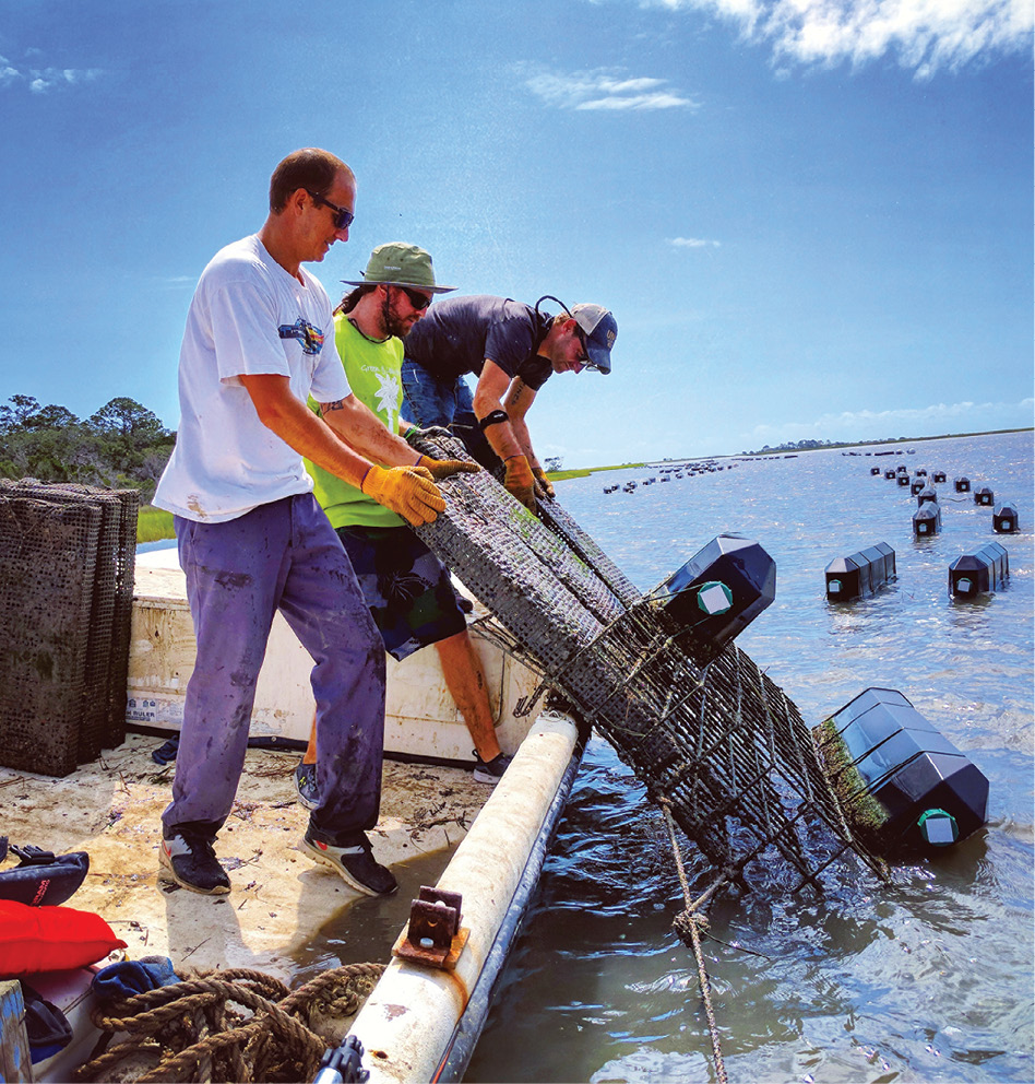 The young team at Barrier Island Oyster Co. hoists floating cages to harvest pearly white Sea Cloud singles. The name refers to a nearby historic plantation as well as the pristine color of its shell.